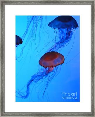 Jellyfish 4 Framed Print by Jeff Breiman