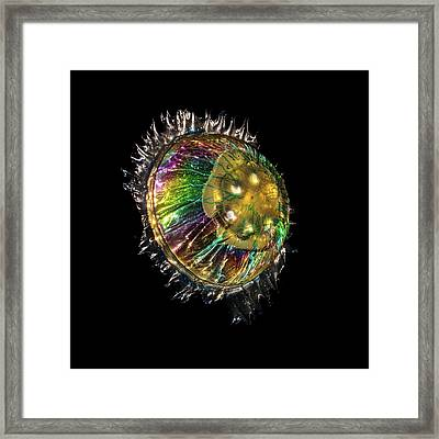 Jellyfish Sculpture In Polarized Light Framed Print by Robin Noorda