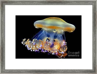 Jellyfish Framed Print by Wernher Krutein