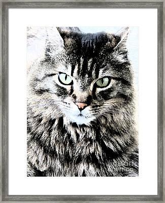 Jesse Framed Print