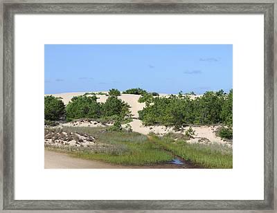 Jockey's Ridge Framed Print by Cathy Lindsey