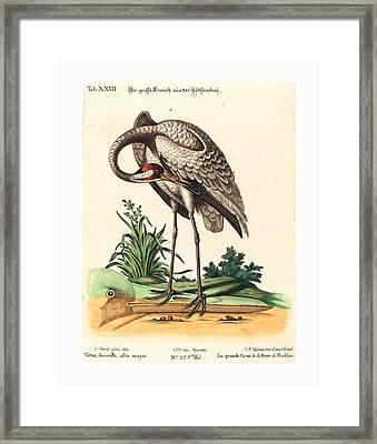 Johann Michael Seligmann After George Edwards German Framed Print by English School