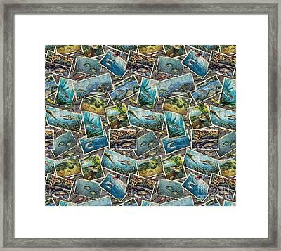 Jon Q Wright Fish Paintings Bedding Framed Print by Jon Q Wright