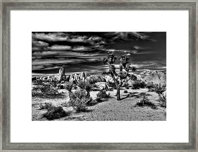 Framed Print featuring the photograph Joshua Tree Black And White by Benjamin Yeager
