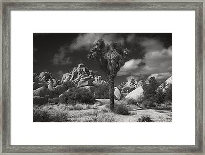 Joshua Tree National Park Framed Print