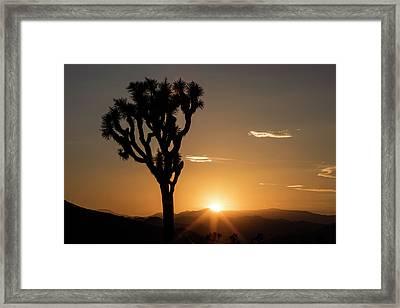 Joshua Tree (yucca Brevifolia) At Sunset Framed Print by Michael Szoenyi