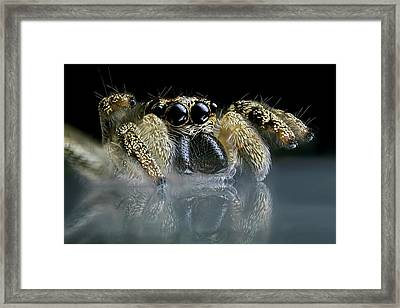Jumping Spider Framed Print by Frank Fox
