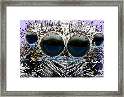 Jumping Spider Head Framed Print