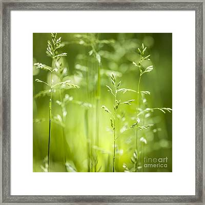 June Green Grass Flowering Framed Print