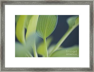 June Plantain Lily Close Ups Framed Print by Jim Corwin