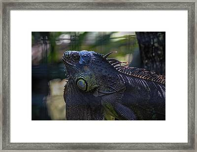 Just Chillin Framed Print by Lesley Brindley