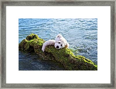 Just Hang On - Teddy Bear Art By William Patrick And Sharon Cummings Framed Print by Sharon Cummings
