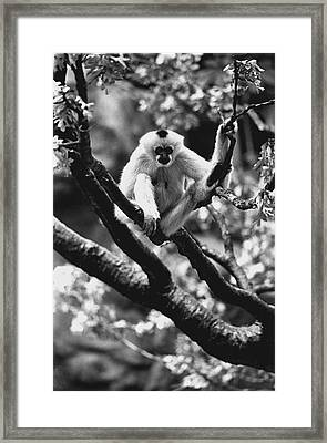 Just Hanging Out Framed Print by Retro Images Archive