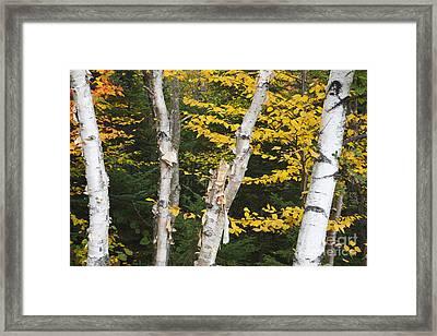 Kancamagus Highway - White Mountains New Hampshire Framed Print