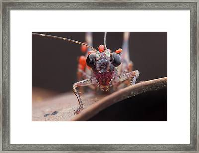 Katydid Covered With Mites Framed Print