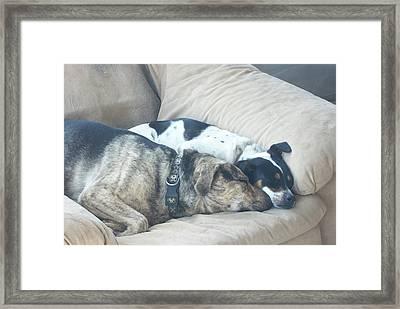Keeping Warm Framed Print by Wide Awake Arts