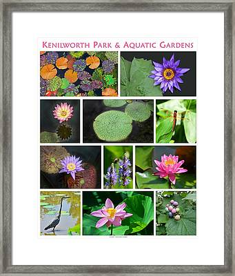 Kenilworth Aquatic Gardens Framed Print