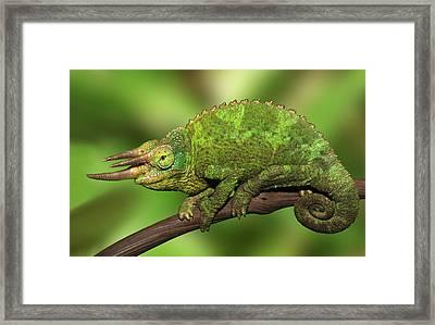 Kenya Close-up Of Jackson's Chameleon Framed Print by Jaynes Gallery