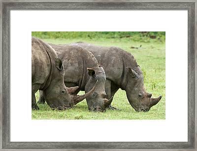 Kenya, Lake Nakuru National Park Framed Print by Jaynes Gallery