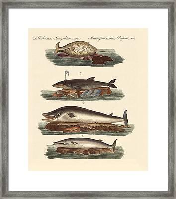 Kinds Of Whales Framed Print by Splendid Art Prints