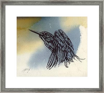 Kingfisher Drawing Framed Print by Alfred Ng