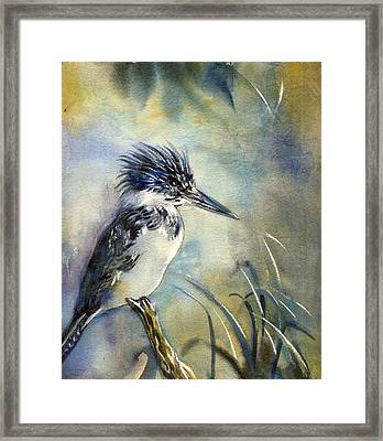 Kingfisher Watercolor Framed Print by Alfred Ng