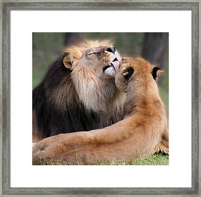 Kiss Framed Print by Helen Akerstrom Photography