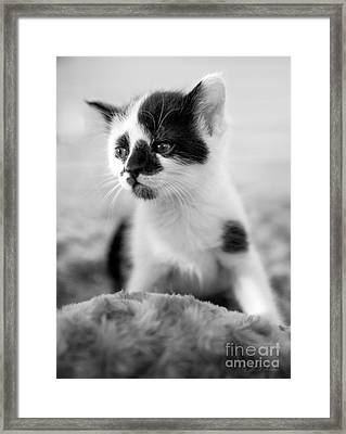 Kitten Dreaming Framed Print by Iris Richardson