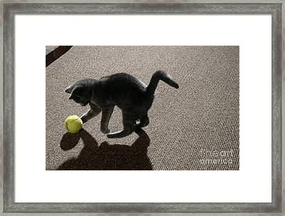Kitten Playing With Ball Framed Print by James L. Amos