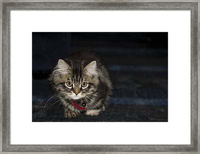 Kitty Framed Print by Sanjeewa Marasinghe