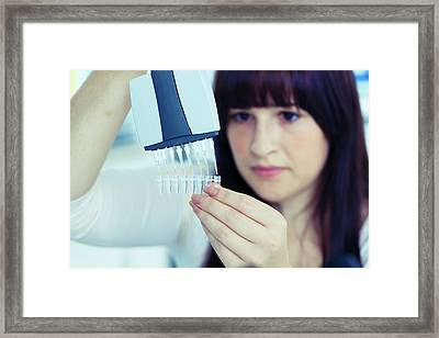 Lab Assistant Holding Multi Pipettes Framed Print