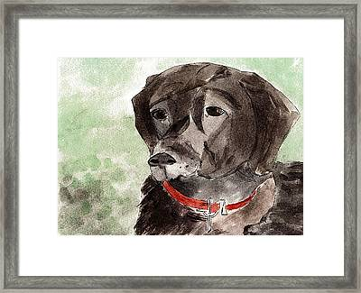 Labrador Retriever Framed Print by Elizabeth Briggs