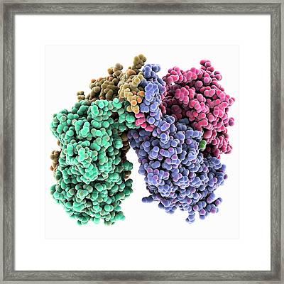 Lac Repressor Molecule Framed Print