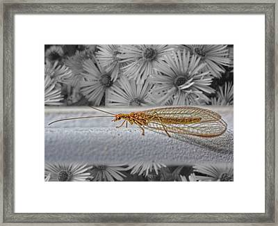 Lacewing Helps In The Garden 2 Framed Print by Henry Kowalski