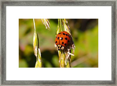 Framed Print featuring the tapestry - textile Lady Bug by Dennis Bucklin