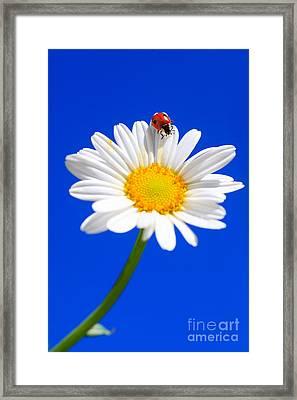 Ladybird On Flower Framed Print by Patrick Frischknecht