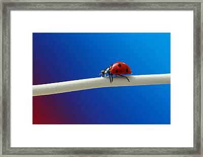 Ladybug Framed Print by Heike Hultsch