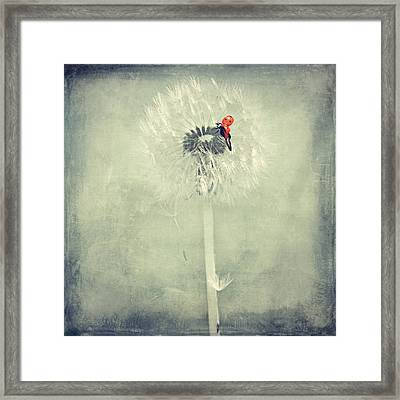Ladybug With Dandelion Framed Print by Heike Hultsch