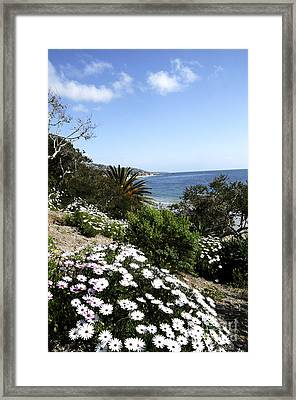 Laguna Beach  Framed Print by Timothy OLeary