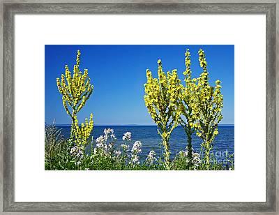 Lake-side Flowers Framed Print by Bjorn Svensson