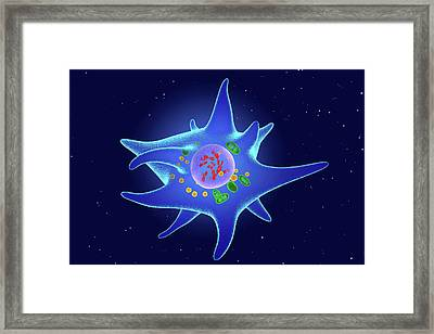 Langerhans Cell Framed Print by Roger Harris/science Photo Library