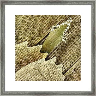 Large White Butterfly Scent Scale Sem Framed Print by Power And Syred