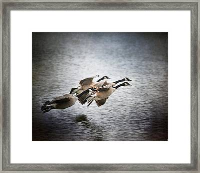 Last Flight Of The Day Framed Print by Jai Johnson