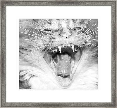 Laughing Cat Framed Print by Jeannette Hunt