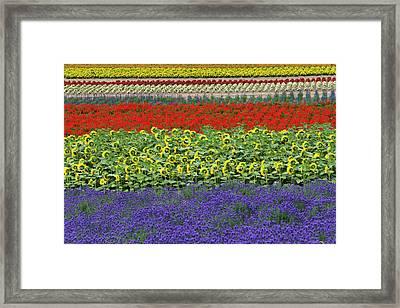 Lavender Farm, Furano, Hokkaido Framed Print by Keren Su