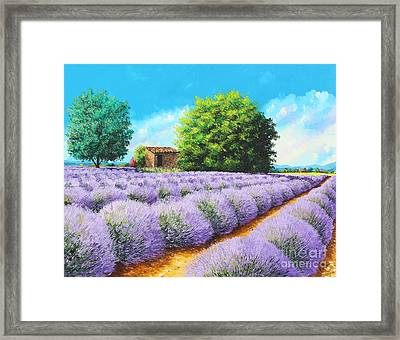 Lavender Lines Framed Print by Jean-Marc Janiaczyk