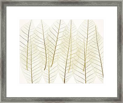 Layered Leaves Framed Print by Kelly Redinger