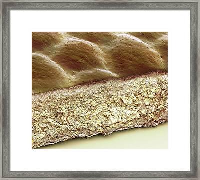 Leather Framed Print