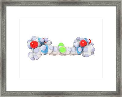 Ledipasvir Hepatitis Drug Molecule Framed Print by Ramon Andrade 3dciencia