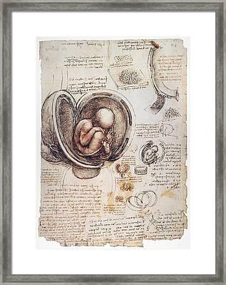 Leonardo: Human Fetus Framed Print by Granger